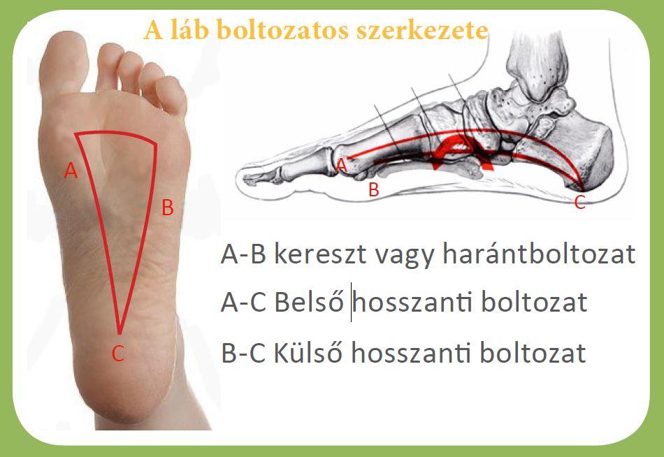 fájdalom a boka ligamentumában vagy ízületében)