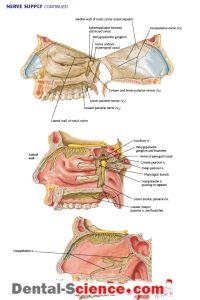 fájdalom perineum ízület)