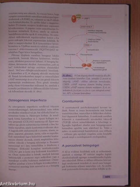 kötőszövet génbetegségek