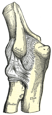 sternoclavicularis ízületi gyulladás