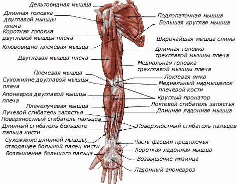 a keresztirányú fasciális ízületek kezelésének artrózisa