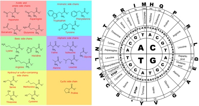 porc helyreállítási aminosavak