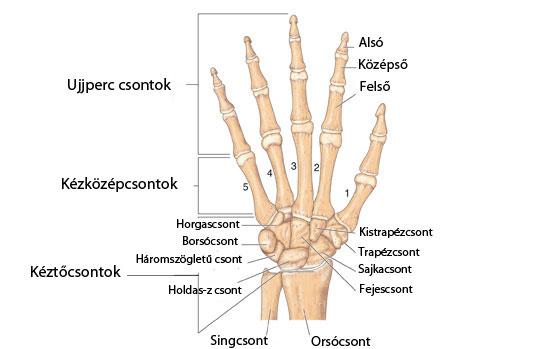 fájdalom a tenyér hüvelykujjának ízületeiben az ujjak és a lábujjak ízületei