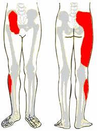 ágyékízület fáj csípő-diszplázia kezelése évente
