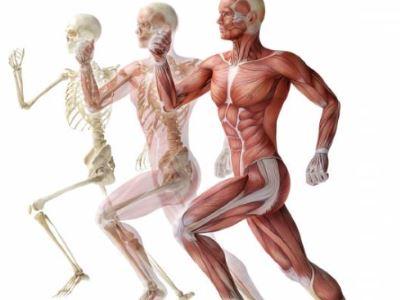 csont- és ízületi betegségek csontritkulás