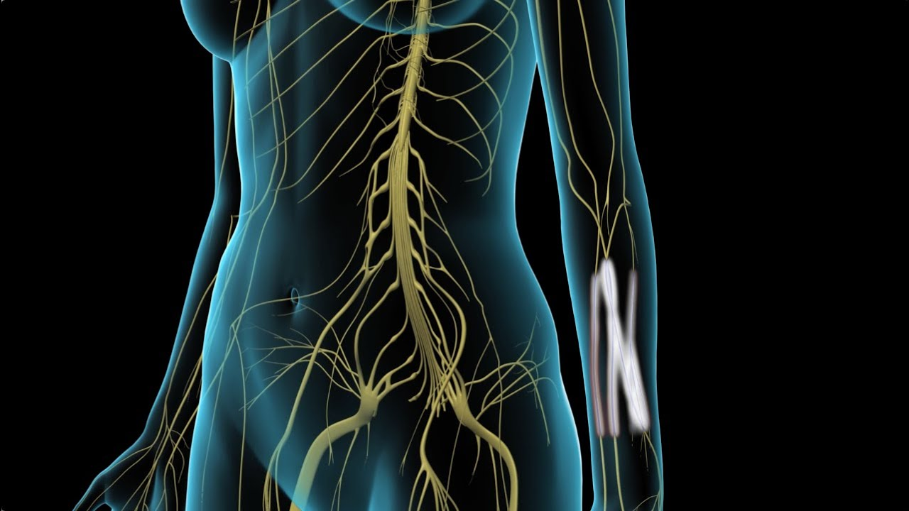 arthrosis kezelés gyógyítókkal