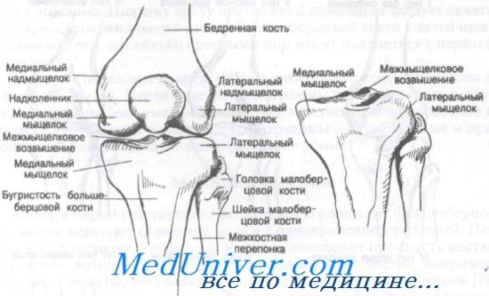 a térdízület és az alsó láb károsodása)
