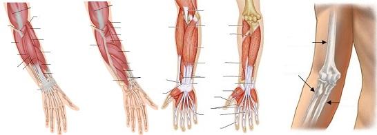 miért fáj a könyökízületek reggel ízületi fájdalom biokémiai paraméterei