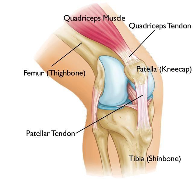 A csontszövet regenerálása és helyreállítása. Csontszövet javítása