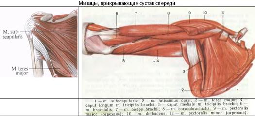 a vállízület supraspinatus izomjának inakárosodása milyen gyógyszerek a térdízület ízületi gyulladásai