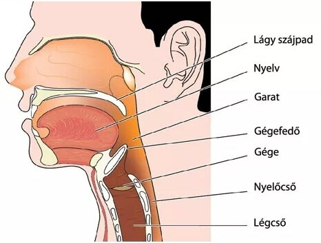 Impingement szindróma - Dr. Nyőgér Zoltán | Ortopéd, balesetsebész szakorvos, magánrendelés, Győr
