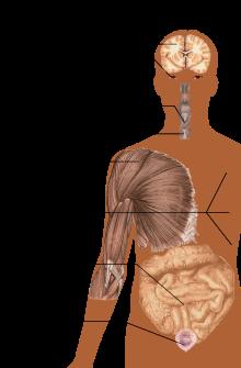 ízületi szklerózis gyógyszer