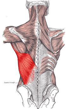gerincízületek íveinek ízületi gyulladása térd nyitott sérülései