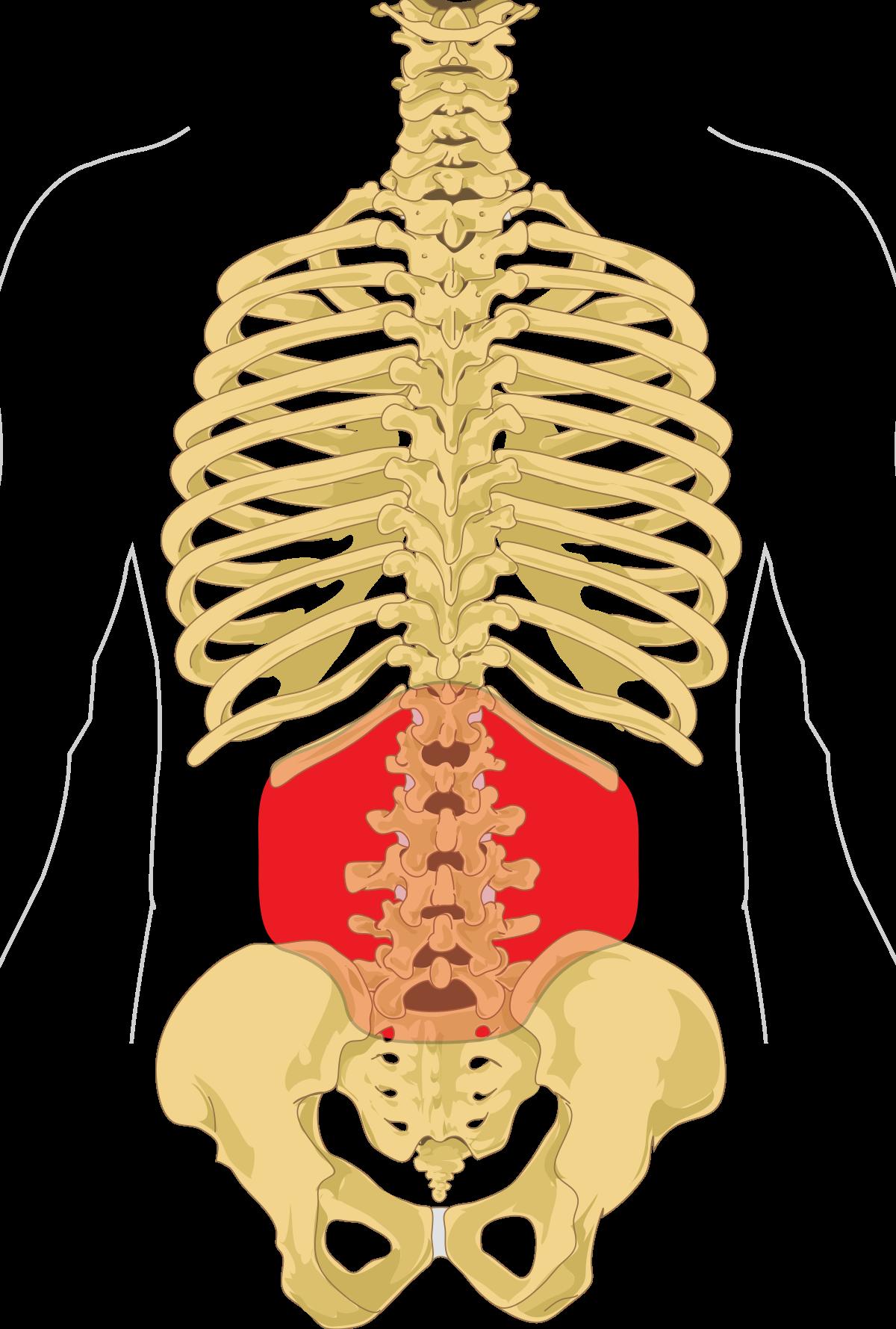 fájdalmat okoz a gerinc ízületeiben