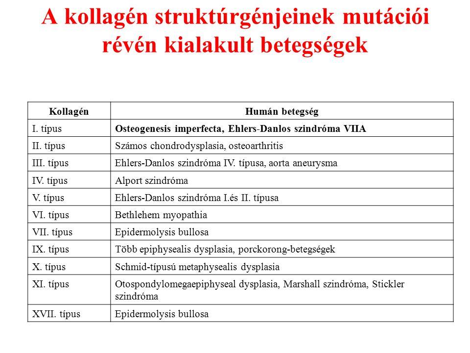 az ízületi betegségek fő csoportjai