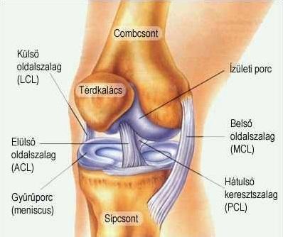 mi köze a térd artrózisához