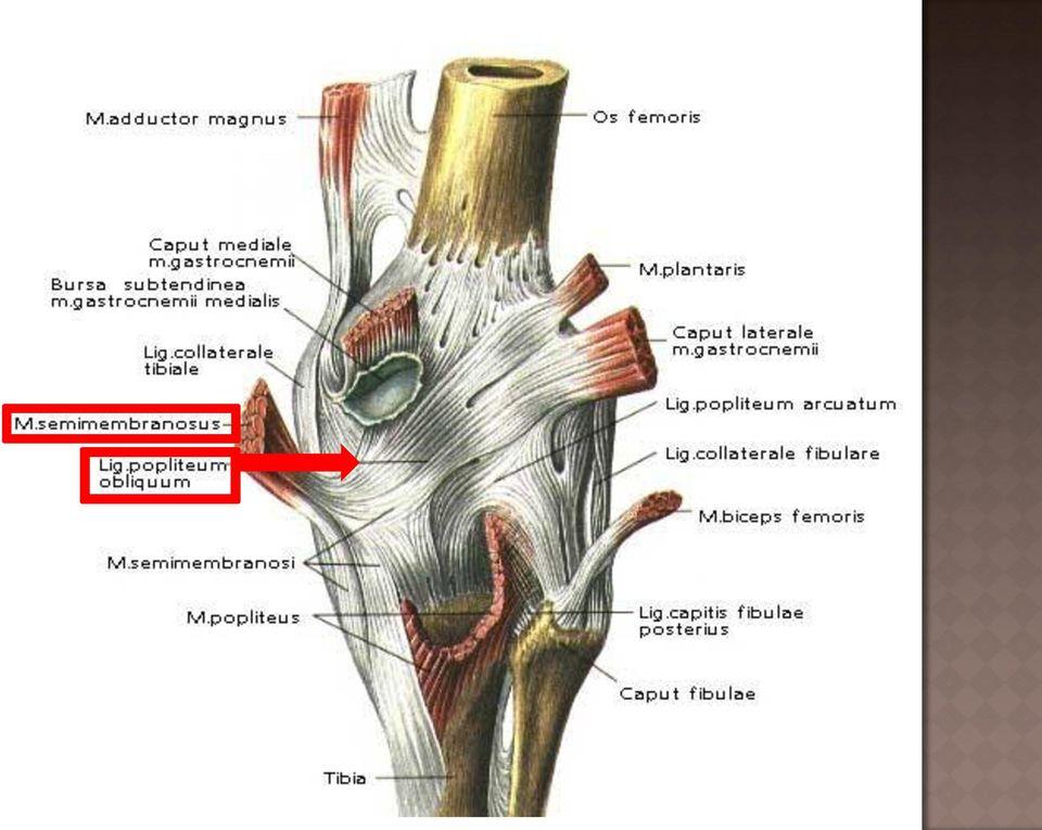 Állkapocsízület (temporo-mandibuláris ízület, TMJ, TMI)