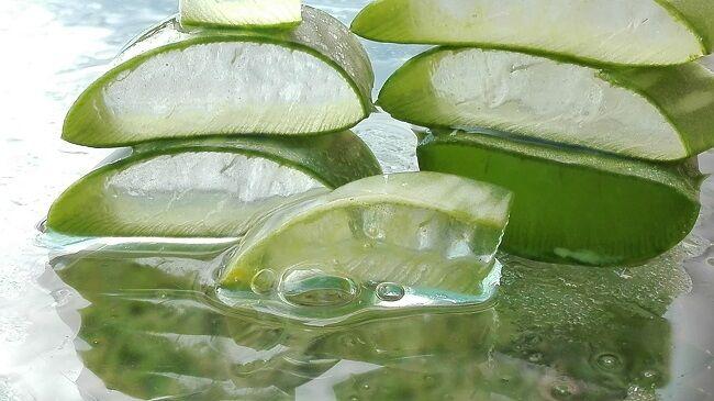 Aloe vera: kívül-belül gyógyír - HáziPatika