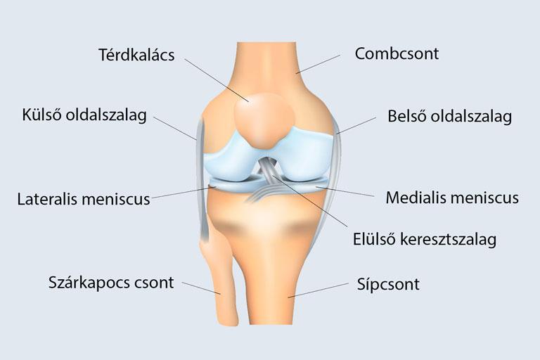 a térd oldalsó szalagjának repedése utáni gyógyulás