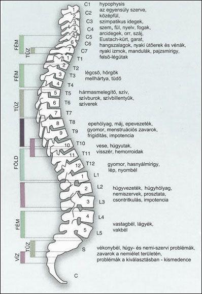 a csípőízület coxarthrosis deformálóinak kezelése kattanások és fájdalom a könyökízületben