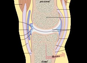ellipszoid térd artrózisához