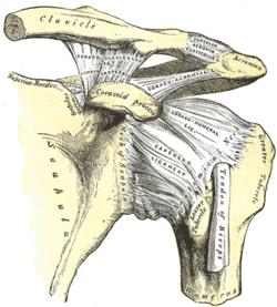 izom-csontrendszeri betegség vállfájdalom esetén