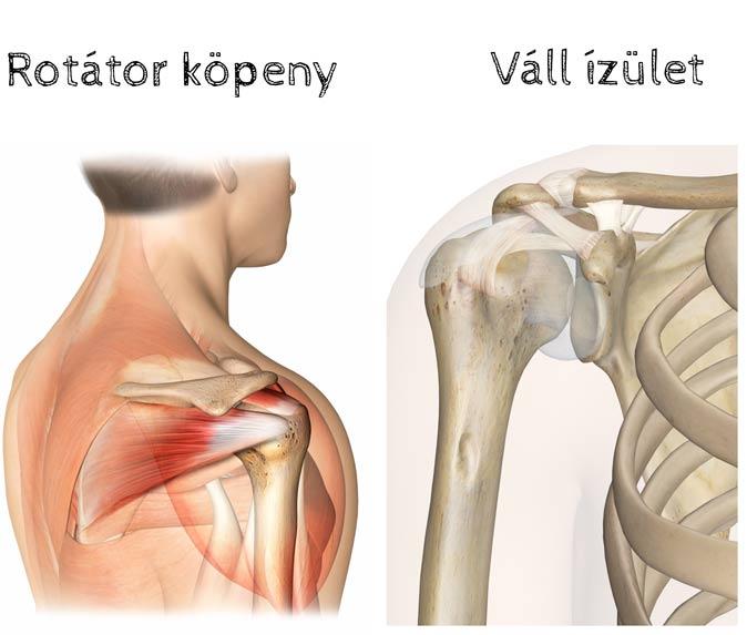 miért fáj az ízületek a kezek a térdízület belső oldalsó ligamentuma