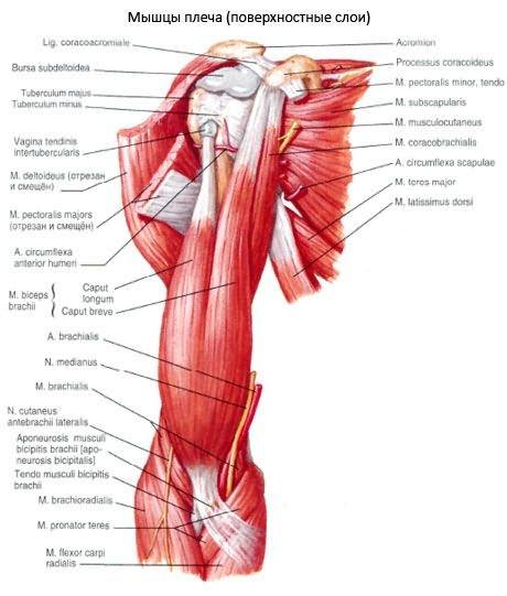 a keresztirányú fasciális ízületek kezelésének ízületi kezelése a könyökízületek artrózisa 1 fok