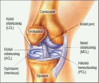 a térdízület ízületi gyulladásának és ízületi gyulladásának kezelése)