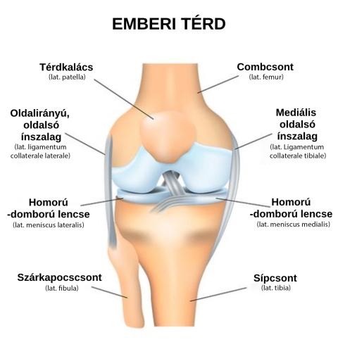 Repülés a térd meniscusában - Bőrgyulladás
