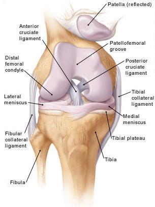 a térd belső meniszkuszának gyulladása