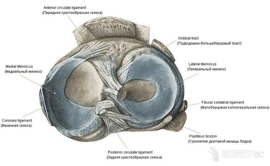 a boka ízületének kötszerzése ligamentum sérülés esetén)