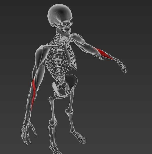 a keresztirányú fasciális ízületek kezelésének artrózisa)