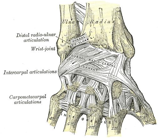 a könyök ízületének ligamentumainak károsodása
