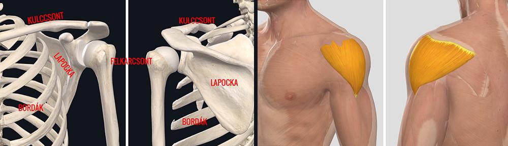 a vállízület ízületi gyulladásos tünetei módszereket okoznak