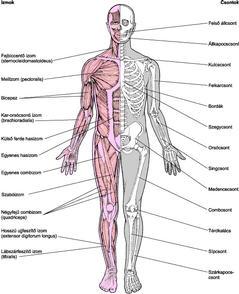 ízületek és csontok fertőző betegségei