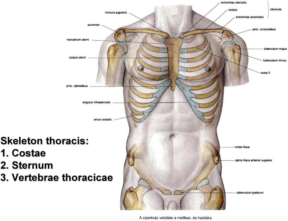 Minden részletesen a nyaki csigolya subluxációjáról