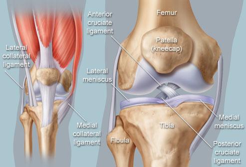 Axiális csontváz és fájdalomkutatás