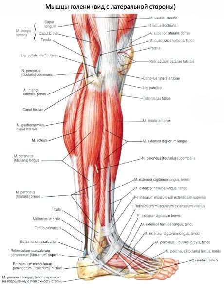 a vállízület artrózisának súlyosbodása