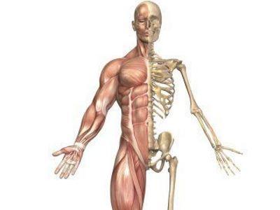 csontok és izmok ízületi betegségei