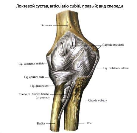 Osteoarthritis 1 metatarsophalangealis ízület kezelése - Csukló