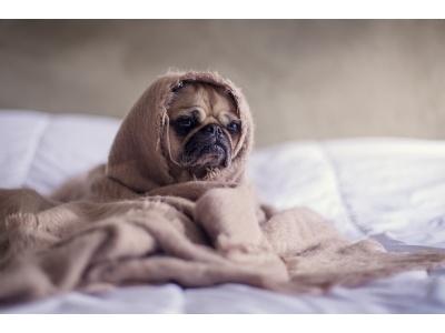 Kutyatáp allergia (teljes átfogó cikk az ételallergiáról)