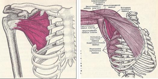 Hogyan kezeljük a vállízület neuritisát
