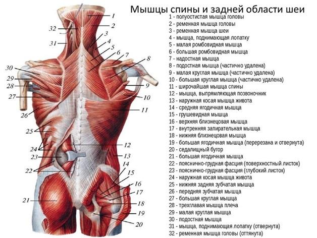 övfájás a csípő területén)