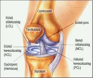 hogyan kezeljük a térd artrózisos polyarthritiszét