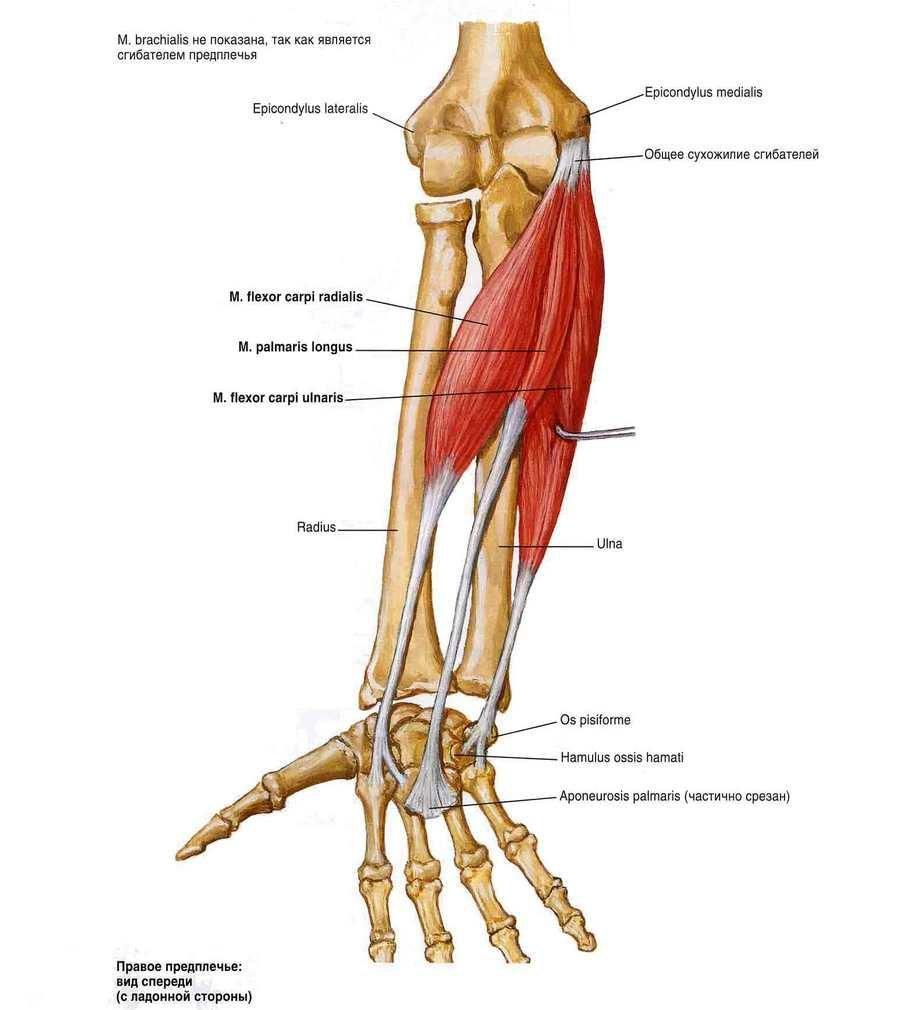 keresztirányú fasciális artrózis kezelés a csípő jobb artrózisa