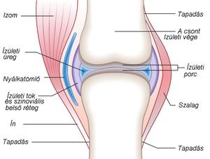 milyen gyorsan előrehalad a csípőízület artrózisa