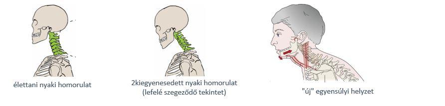 fájdalom révén ízület kialakulása)