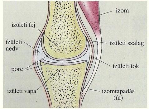 ízületek és csontok fertőző betegségei)