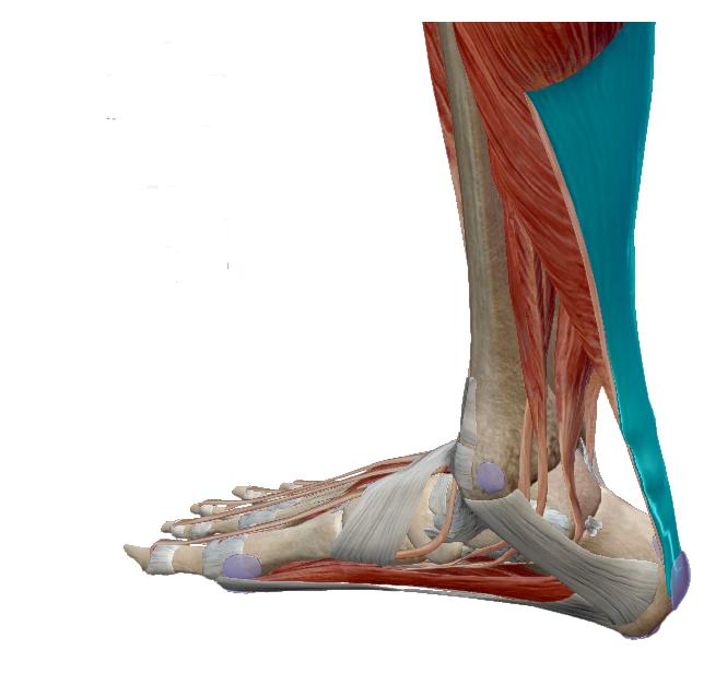 a térd artritiszének kezelésére szolgáló módszer